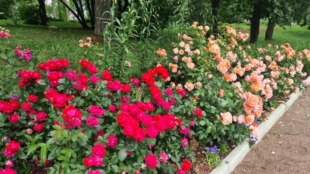 Марьинские цветники