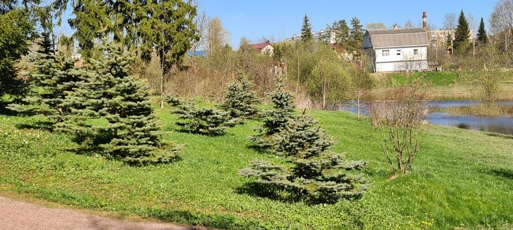 Парк весна 2021