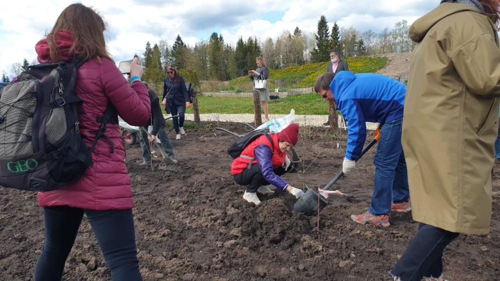 День русской усадьбы: посадка вишневого сада