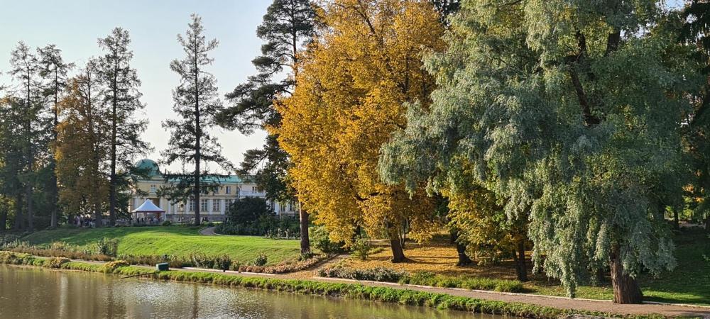Осень в Марьино 2020